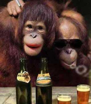 funny-monkey-4